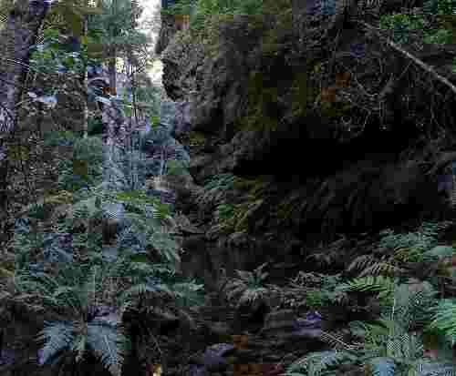 727px_rainforest_bluemountainsnsw.jpg - 10,65 kB